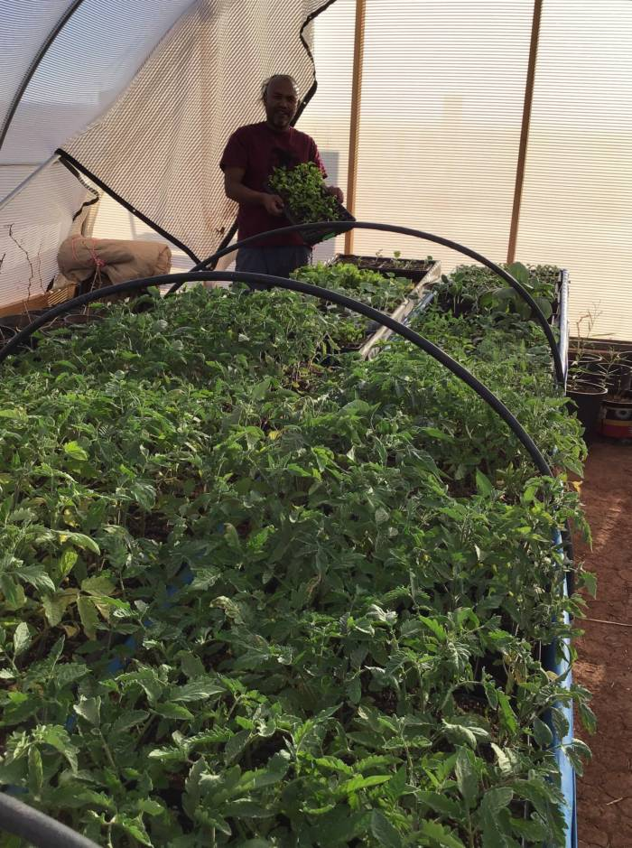 Tyrone Thompson growing starts in his hoop house